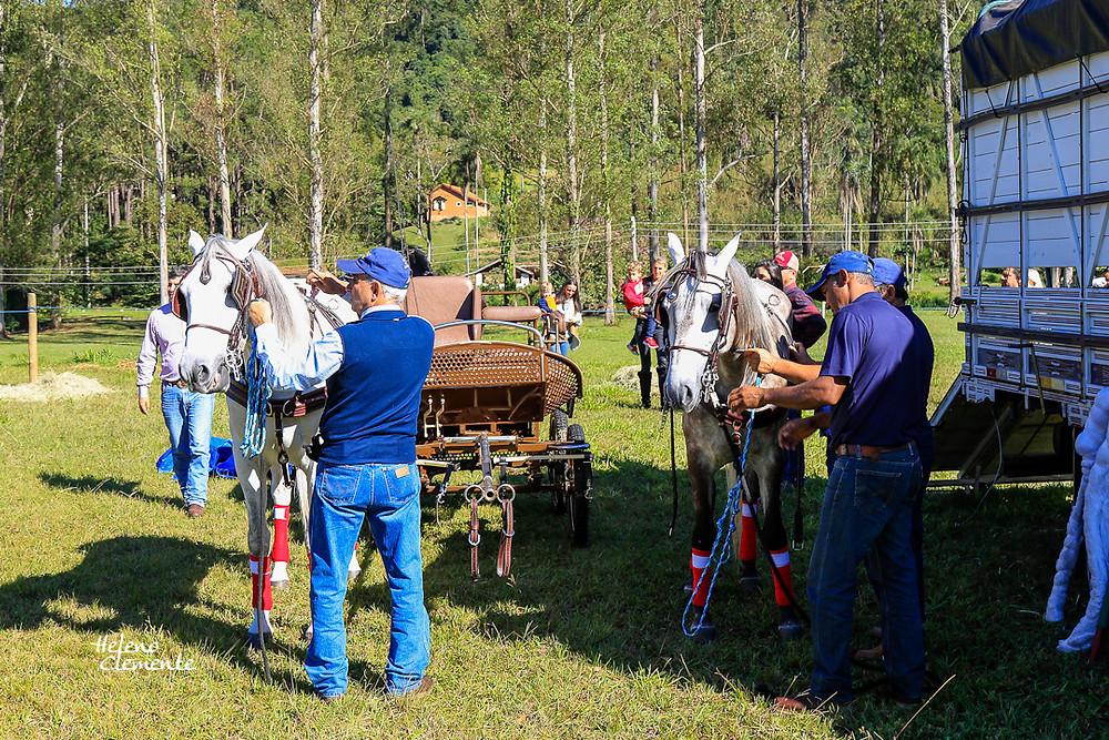 escovação dos cavalos, trançamento decrinas, verificação dos arreios e itens de segurança das carruagens, enfim, rotina semelhante a qualquer dia de competição.