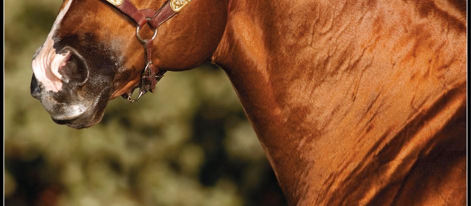 Brisco County Jr está em nova casa e novos donos: Haras Projeto Cavalo e Luís Perecin