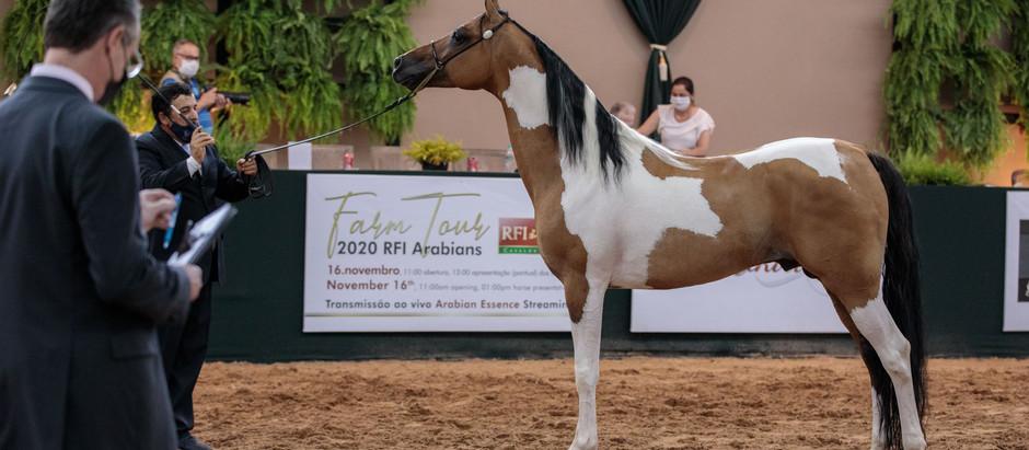 Campeões das provas de Halter na 39ª Nacional do Cavalo Árabe