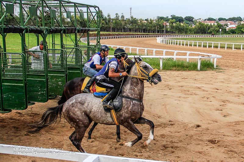 Start gate Treino de box para cavalos de corrida