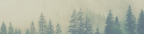 forest banner website_edited.jpg