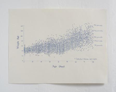 Holstein Heifers Growth Chart