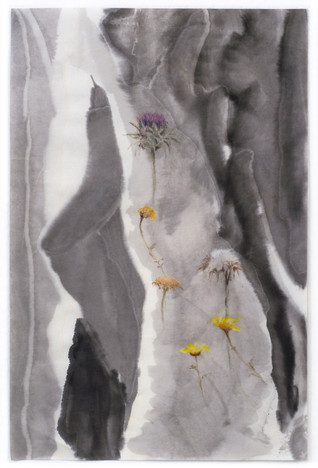 flora palestina