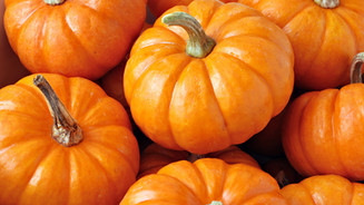 Blackbaud CRM™ Trick or Treat: Is that a designation or a purpose?