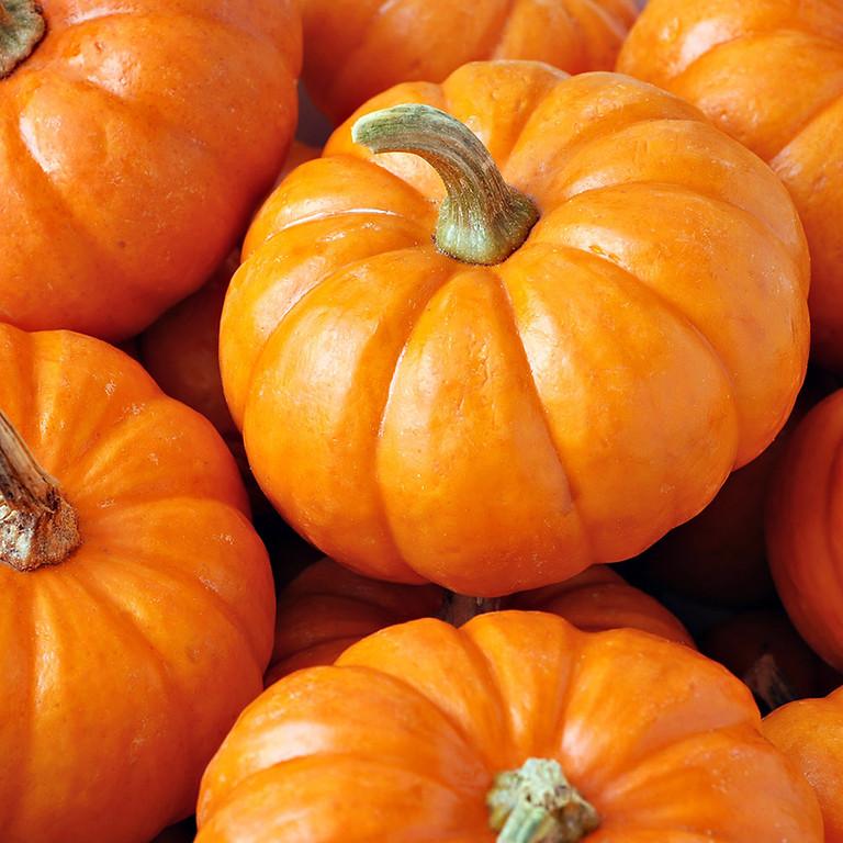 BSA Troop 31 Annual Oct Pumpkin Sale (1)