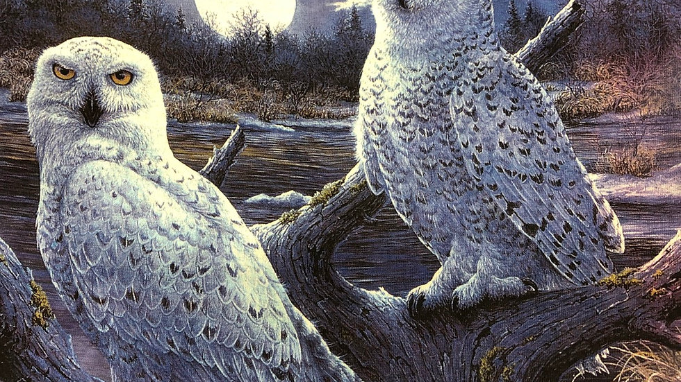 Snowy Owls by The Mountain