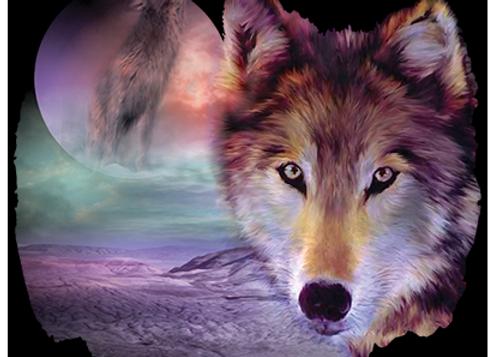 I Am Wolf Black (USA23)