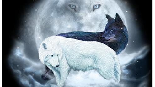 Yin Yang Wolves (USA28)