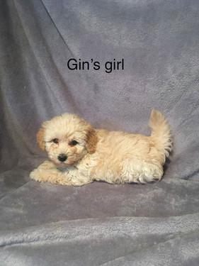 Gins Girl.jpg
