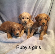 Rubys Girl Puppies.jpeg