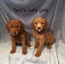 Tara Curly girls.jpeg