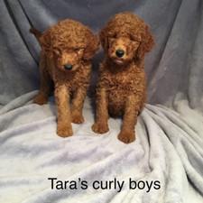 Tara Curly boys.jpeg