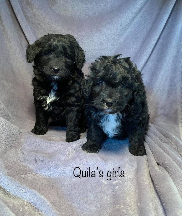 Quilas Girls.jpg