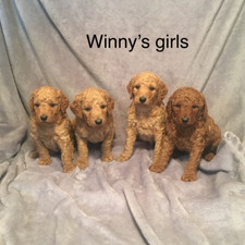 Winny girls.jpeg