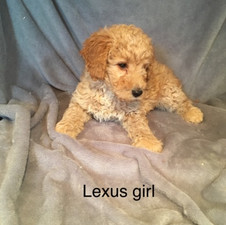 Lexus Girl.jpeg