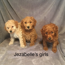 Jezabelle Girl Puppies.jpeg