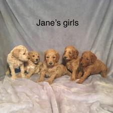 Jane girls.jpeg