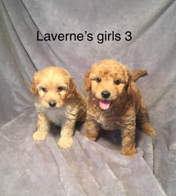 Laverne Girl Puppies.jpeg