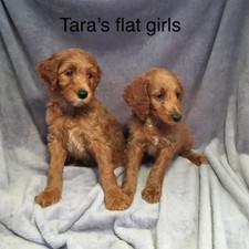 Tara Flat Girls.jpeg