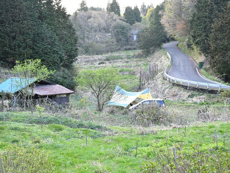 ブッシュクラフト的キャンプに行ってきました。