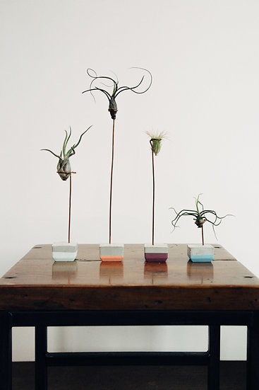Small Air Plant & Colored Holder