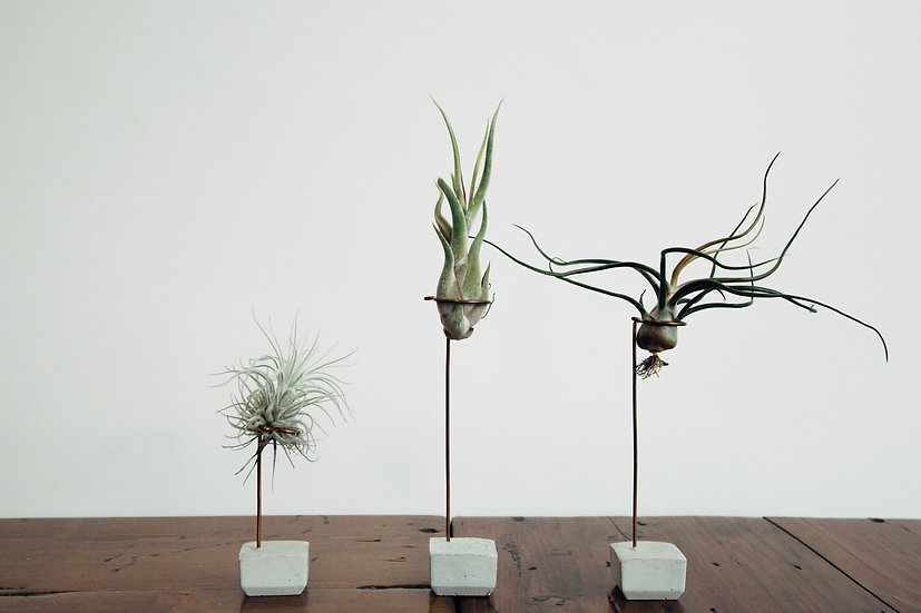 Large Air Plant & Natural Holder