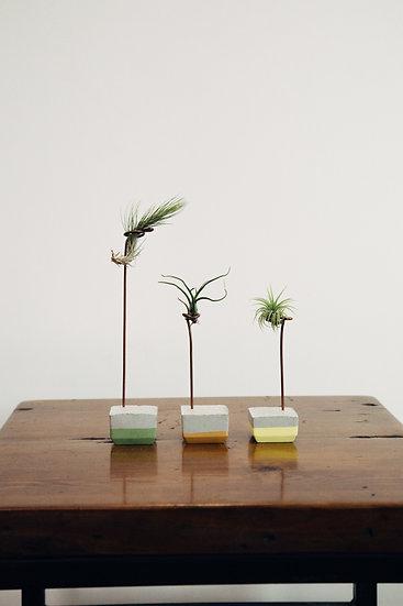 Mini Air Plant & Colored Holder
