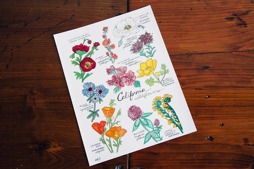 California Wildflowers Print