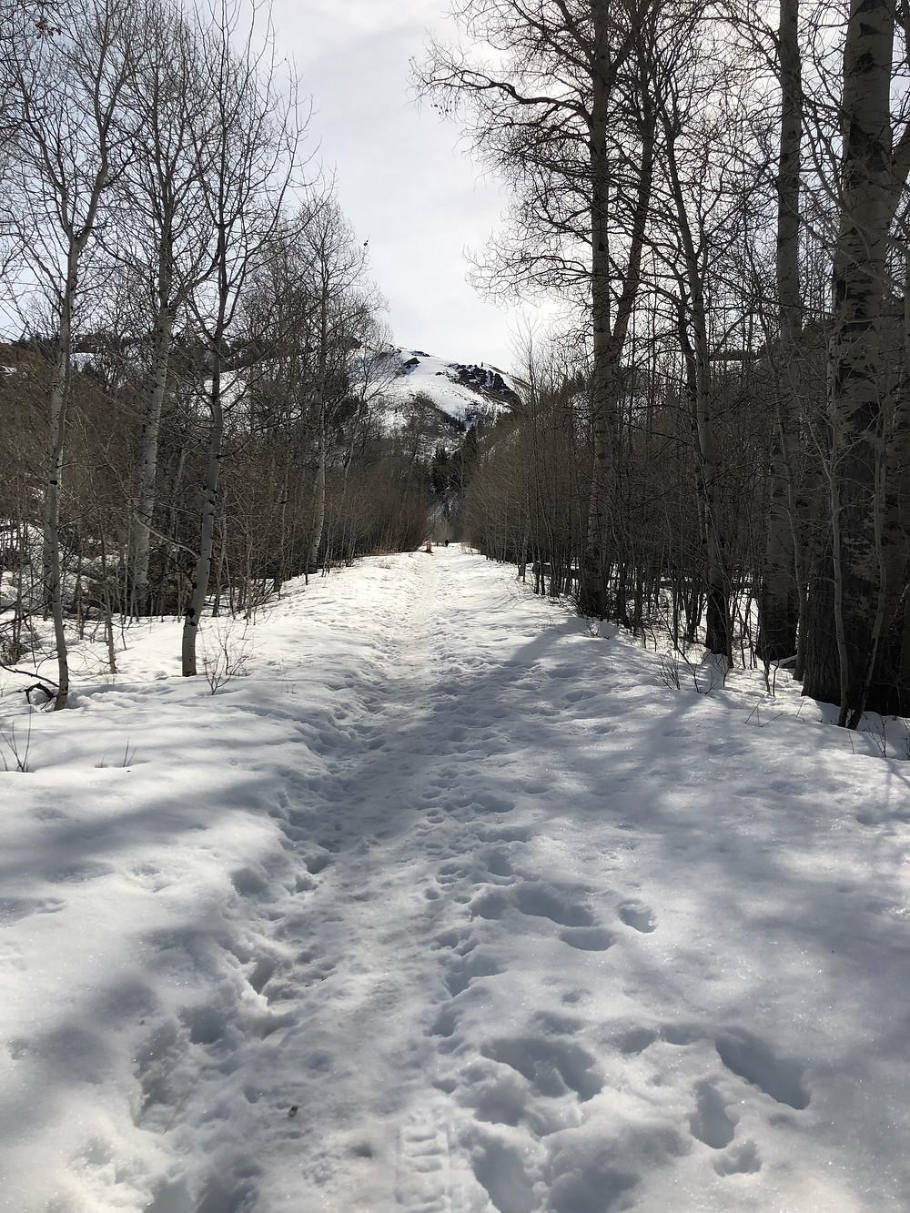 Hiking Prospect Loop - Sun Valley, ID