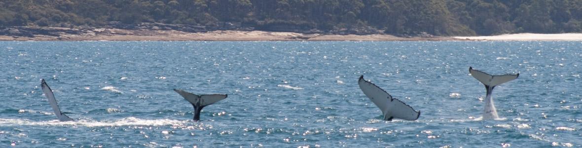 Vincentia Huskisson Jervis Bay