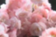 Shiatsu - Über mich Blumen