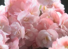 Floral Diffuser Blends for Springtime