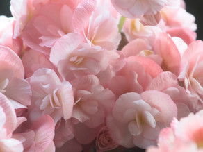 Flowery Language