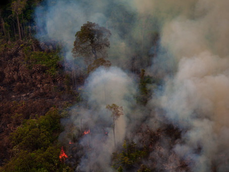 CAUSE FOR THOUGHT: THE EFFECTS OF DEFORESTATION IN THE AMAZON
