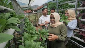 Hankook Tire Indonesia Menggagas Kebun Hidroponik sebagai Pemberdayaan Ekonomi di Kawasan Industri