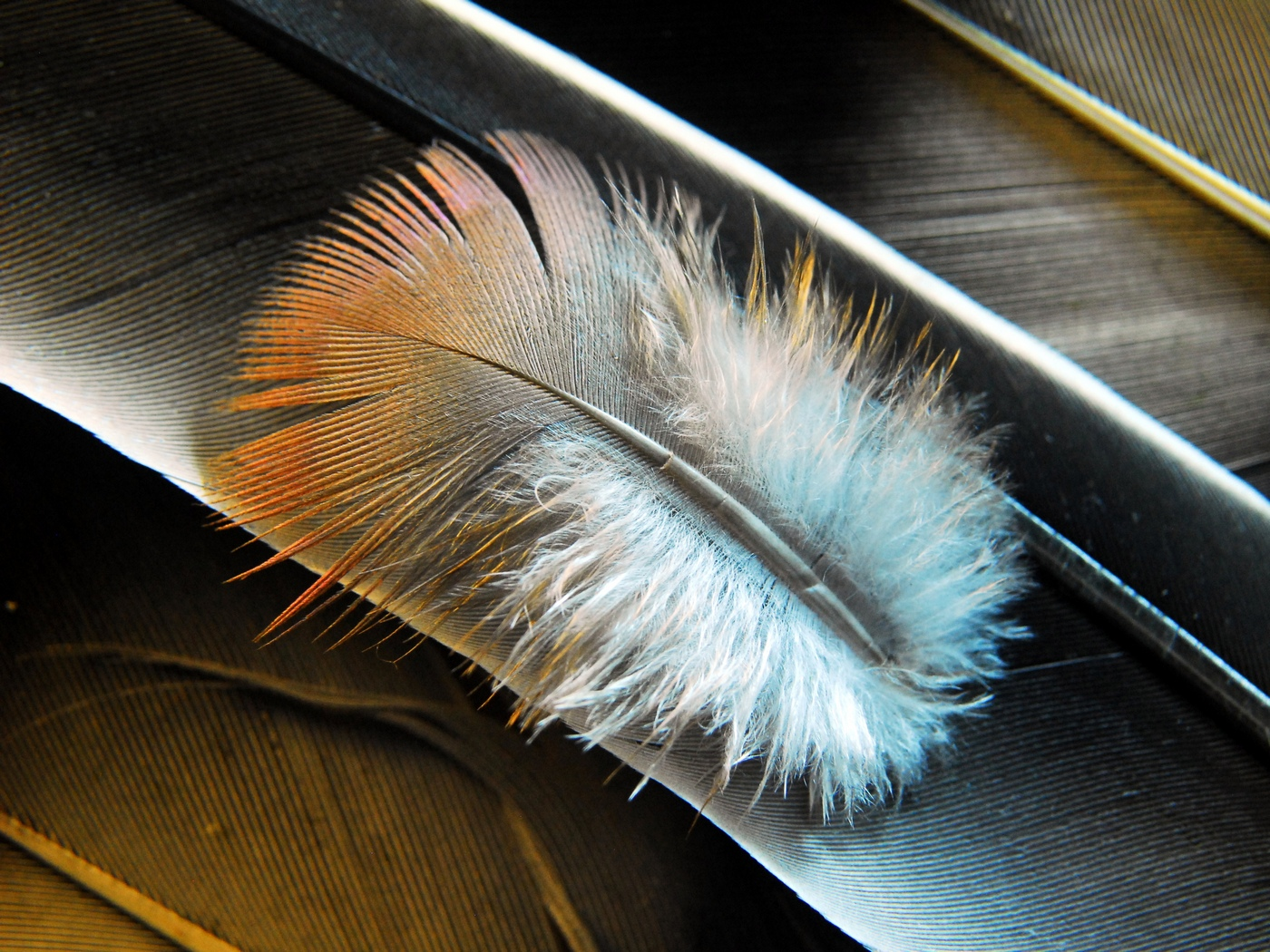 Feather on Feathers