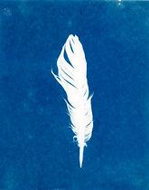 Cyanotype Feather.jpg