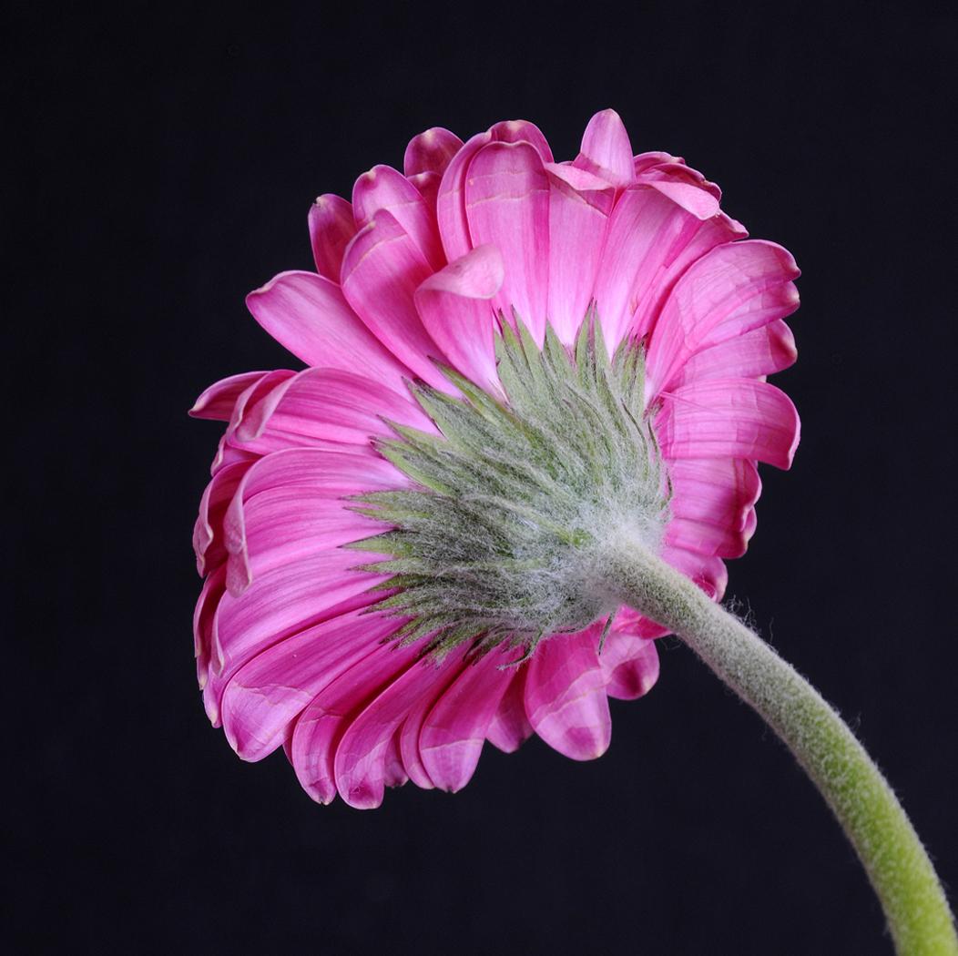 FlowerStudy