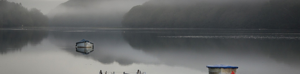 Tresillian River Morning.jpg