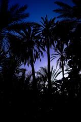 Tunez nocturnes003.jpg