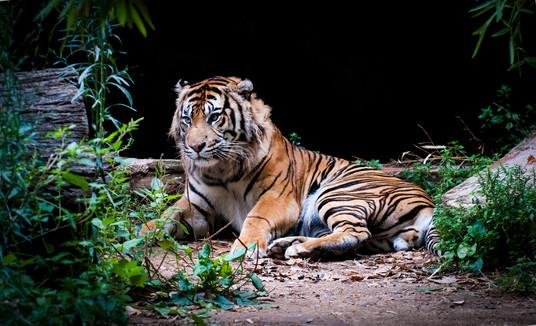 2011-5364-ZooBCN.jpg