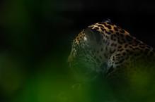 2011-5413-ZooBCN.jpg