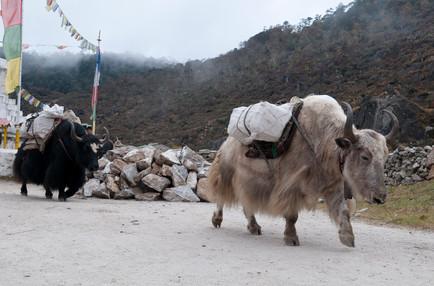 Nepal2010-0652.jpg