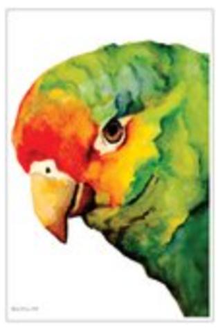 Amazon Post Card