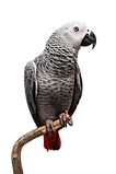 Parrot_edited.png