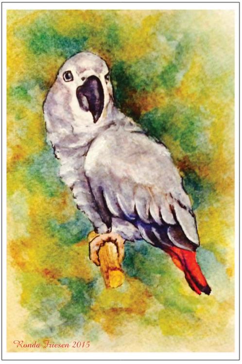 Congo Postcard #2