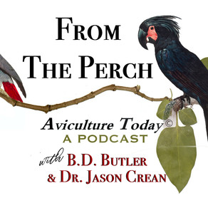 Podcast - Summer Catch Up with Dr. Jason & B.D.