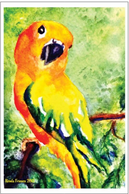 Conure Postcard