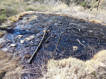 Oil Seeps in California
