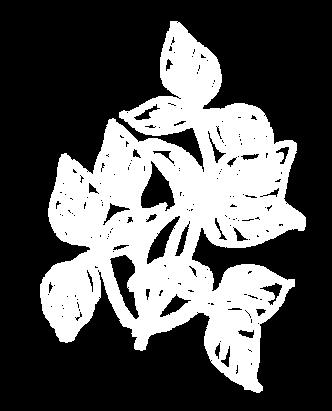 Soy Leaf- White-01.png